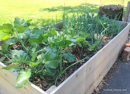 raised vegetable garden beds 11 pros and 4 cons are raised vegetable garden beds