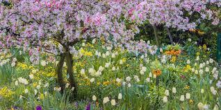 garden bulbs. Plant These Bulbs ASAP For Gorgeous Color When Spring Rolls Around. Garden