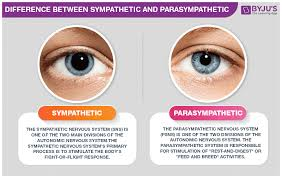 Differences Between Sympathetic And Parasympathetic Nervous