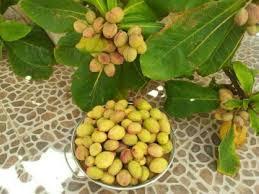 رويا الوز.الهندي في المنام : شجرة اللوز في السعودية