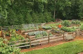 best vegetable garden tips for