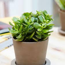 feng shui. Top 5 Feng Shui Plants. Note: