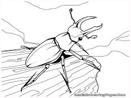 Small Picture Insects Coloring Pages Realistic Insect Gekimoe 60605