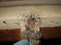 bed bug stains what you
