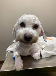 A Letter From Sara Rhodes. She Is Issuing a $200.00 Matching Donation  Challenge for Little Linus. Please Read. – Small Paws Rescue