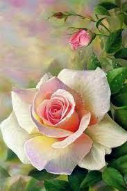 270 idee su Bellissime Rose nel 2021 | fiori, fiori dipinti, rose