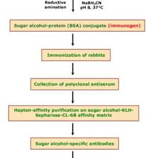 Sugar Alcohol Chart Flow Chart For The Generation Of Sugar Alcohol Specific Igg