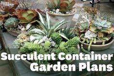 My Container Garden Of Succulents Is GrowingSucculent Container Garden Plans