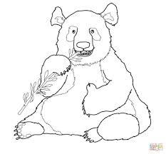 Schattige Panda Kleurplaat Kleurplaat Voor Kinderen