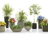 Размещение растений в <b>кашпо</b>