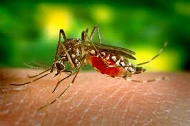 Image result for Mosquito Control In Your Yard