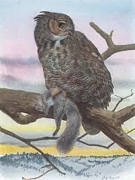 great horned owl 70birds birdhouse
