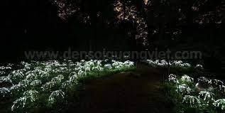fiber optic garden lights