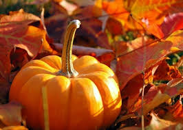 Image result for fall and pumpkin images