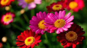 garden flowers. Pretty Colors Blossoms Garden Flowers Flower Wallpaper Hd Free Download