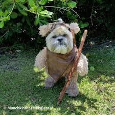 how to make a ewok dog costume best 25 ewok dog costume ideas on