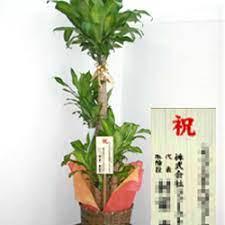開院 祝い 観葉 植物