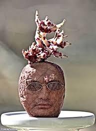 real mr potato head. Contemporary Potato Real Mr Potato Head In