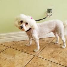 photo of clean puppy pet grooming austin tx united states mia