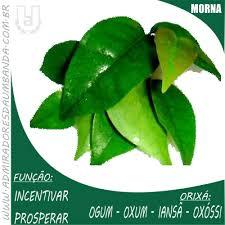 É uma planta medicinal, litúrgica, porém muito tóxica. Admiradores Da Umbandapitanga Folha De Admiradores Da Umbanda