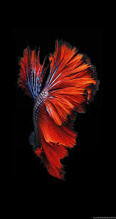 Moving Wallpapers iPhone Wallpapers ...