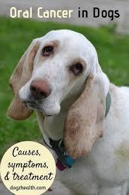 benign tumors in dogs