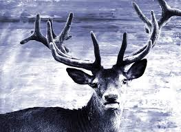 deer at dawn canvas art