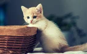 Cute Kitten Desktop Wallpapers - Top ...