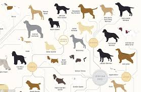 The Family Tree Of Dogs Infographic Reveals How Every Breed