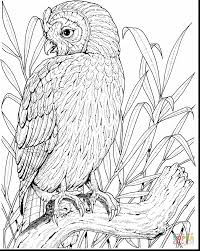 Small Picture terrific printable owl coloring pages adult with coloring pages