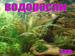К уроку биологии Водоросли класс Июдина Л А school № Водоросли 6 класс