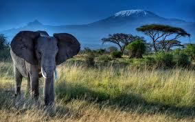Elephant Dry Grass Trees Mount ...