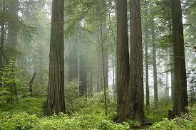 Cerita 3 Pohon