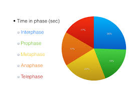 Cell Cycle Pie Chart Mitosis Lab Ap Biology Labs