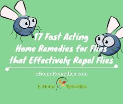 17 Fast Acting Home Reme s for Flies that Effectively Repel Flies
