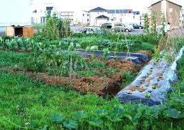 Small Picture Vegetable Garden Design Garden Design Ideas