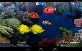 Beautiful Fish Wallpaper | NMgnCP.com