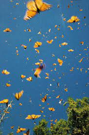 Aesthetic Butterfly Wallpapers - Top ...