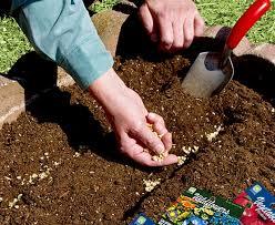 garden seed. Home Garden Seeds Seed H