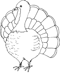 Turkey Coloring Pages For Adults Free Crafts Preschoolers Wild