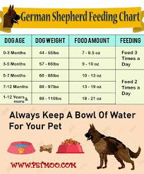German Shepherd Dog Breed Information And Health Problems