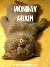 Monday Quotes Funny Fascinating Funny Monday Cat Quote Pictures Photos And Images For Facebook