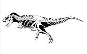 Small Picture T Rex Skeleton Drawing Dinosaur Wefsjkcjpg Coloring Pages Maxvision