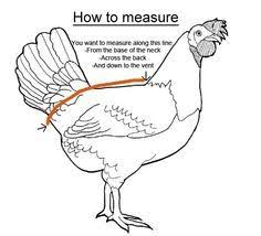Chicken Saddle Pattern Inspiration Printable Chicken Sewing Patterns On Chicken Saddles Fast Grow