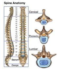 description orthopedic surgeon description