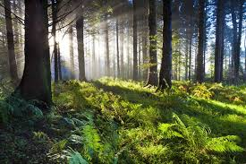 reasons why forests are important mother nature network union wood sunrise
