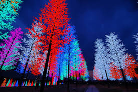 Different Types Of Artificial Christmas Trees To Brighten Up Your Types Of Christmas Tree Lights