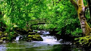 Relax 8 Hours-Relaxing <b>Nature Sounds</b>-Study-Sleep-Meditation ...