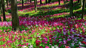 Beautiful Gardens With Pink | Beautiful Multi Colored Flower Garden  Wallpaper | All Flowers | Send