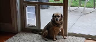 use the patio pet door system to convert your sliding glass door